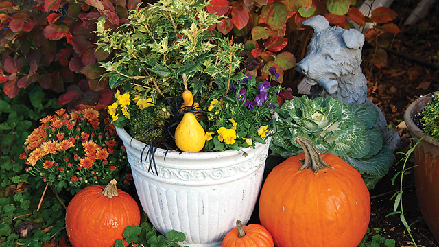 Container Gardens Made Simple