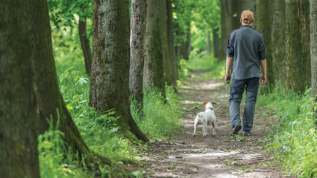 5 Ways To Protect Pets From Ticks