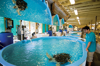 Take a tour and root for rehabbing sea turtles swimming in tanks at the Sea Turtle Center on Jekyll Island.
