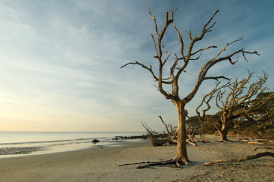 Driftwood Beach, on the northeast tip of Jekyll Island, is an amazing stretch of sand for explorers and photographers of all ages.