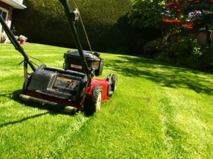lawn mowing _ grass